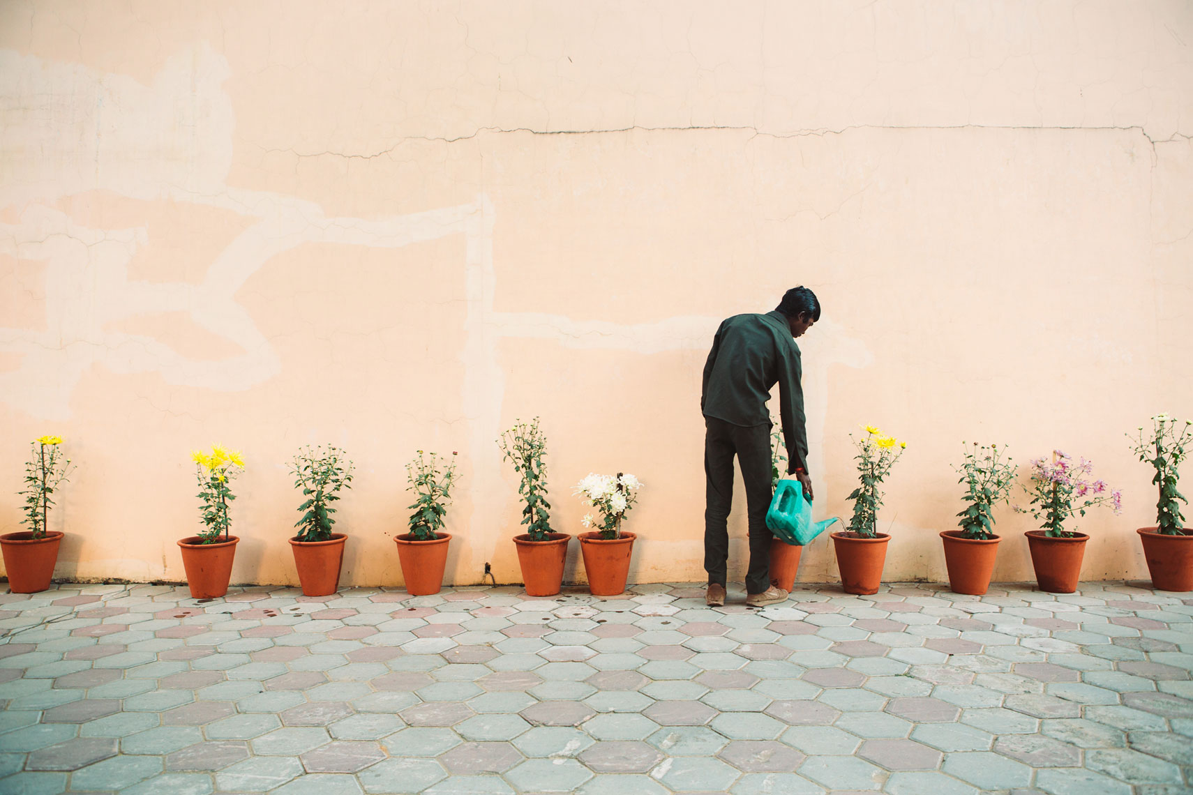 deepi-ahluwalia-india-jaipur-water-plants